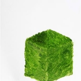 Cube Shrub, Oil on coated paper, 33x27cm - 2011